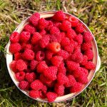 Raspberry Calories | Fat Burning Miracle Or Sugar Bomb?